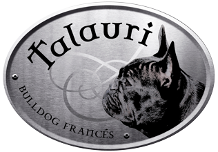 Talauri kennel french bulldog